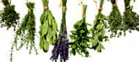 Healthy Secrets of Herbs
